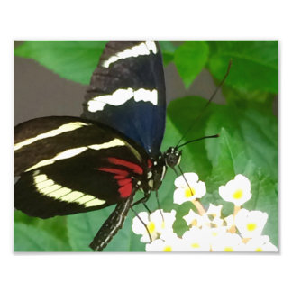 花の写真の蝶 フォト