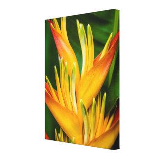 花の写真撮影Heliconiaの極楽鳥 キャンバスプリント