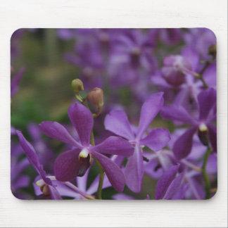 花の写真: 庭の紫色の蘭 マウスパッド