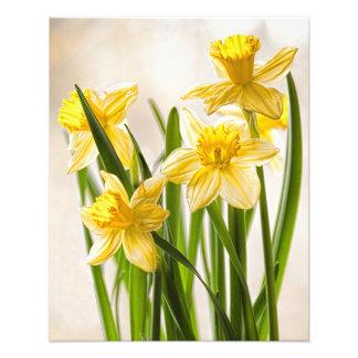 花の写真:  黄色い春のラッパスイセン フォトプリント