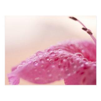 花の結露 ポストカード