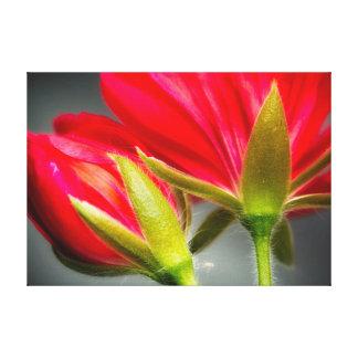 花の背部からのviningゼラニウムのクローズアップ キャンバスプリント