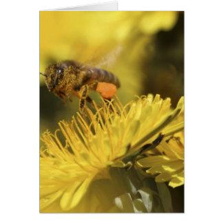 花の蜂蜜の蜂 カード