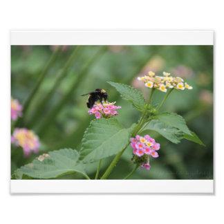 花の蜜蜂 フォトプリント