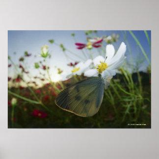 花の蝶のクローズアップ ポスター