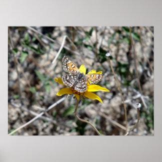 花の蝶、ジョシュアツリーの国立公園 ポスター