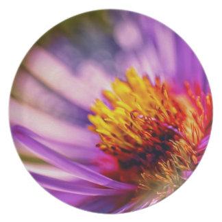 花の詳細 プレート