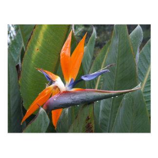 花の郵便はがき極楽鳥 ポストカード