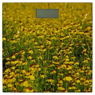 花の黄色い分野 体重計