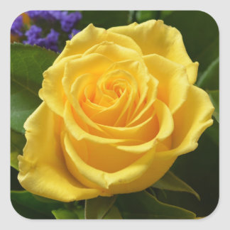 花の黄色のバラおよび紫色の花 スクエアシール
