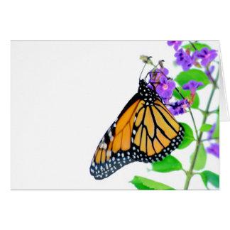 花の(昆虫)オオカバマダラ、モナーク カード
