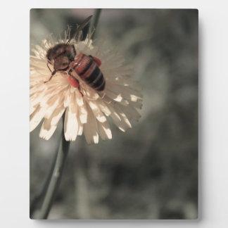 花の《昆虫》マルハナバチ フォトプラーク