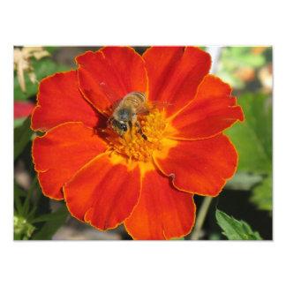 花の《昆虫》マルハナバチ フォトプリント