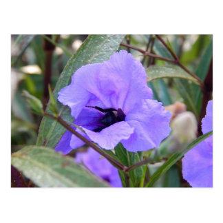 花の《昆虫》マルハナバチ ポストカード