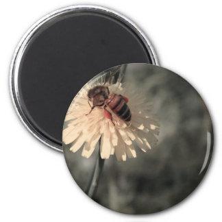 花の《昆虫》マルハナバチ マグネット