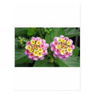 花のLantana ポストカード