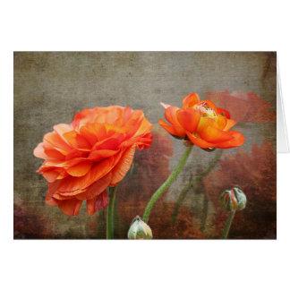 花のLifecyle -ケシ カード