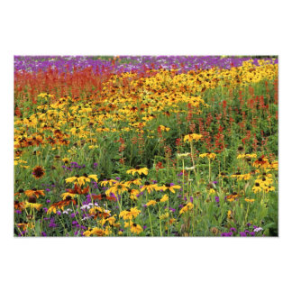 花は国際的な平和庭で表示します フォトプリント