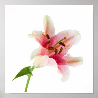 花は3つを-ピンクのLilly置きました ポスター
