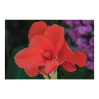 花はD.カーロスIの庭で見つけました ポスター