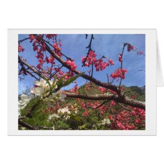 花カード カード