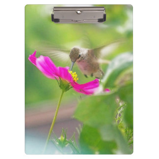 花ハチドリの花の鳥の野性生物動物 クリップボード