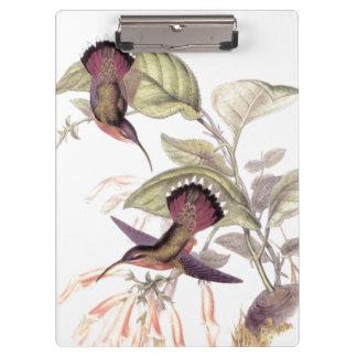 花ハチドリの鳥の野性生物動物の花 クリップボード