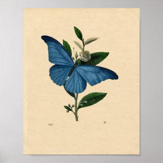 花ポスターのかわいらしいヴィンテージの青い蝶 ポスター