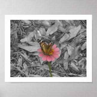 花ポスターの蝶 ポスター