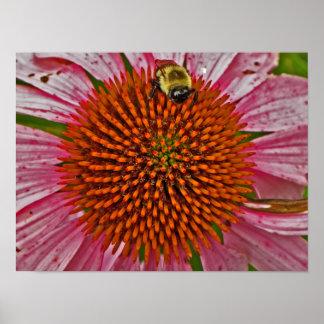 花ポスターの《昆虫》マルハナバチ ポスター