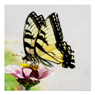 花ポスターを共有している蝶 ポスター