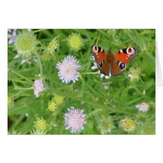 花上の孔雀蝶 グリーティングカード