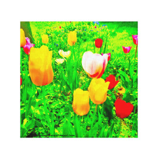 花園のチューリップ キャンバスプリント