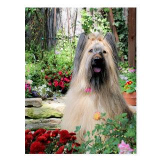 花園のBriard犬 ポストカード