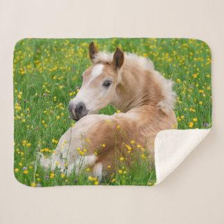 花壇で休んでいるHaflingerの馬のかわいい子馬 シェルパブランケット