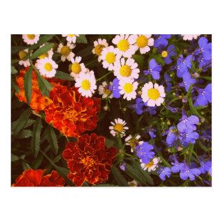 花壇カード ポストカード