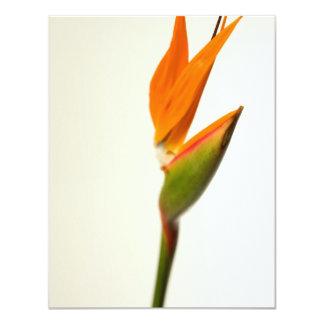 花極楽鳥 カード