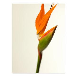 花極楽鳥 ポストカード