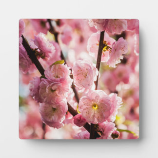 花盛りのプラム-ピンクのParadize フォトプラーク