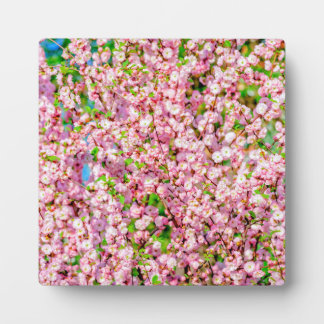 花盛りのプラム フォトプラーク