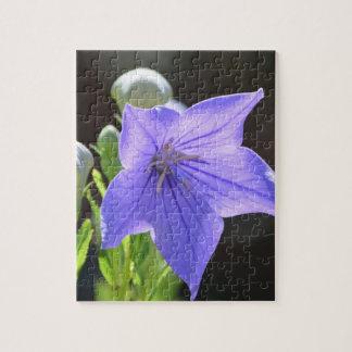 花盛りの気球花 ジグソーパズル