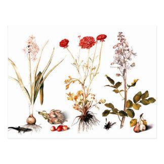 花盛りのHyacinth、RanunculusおよびDittany ポストカード