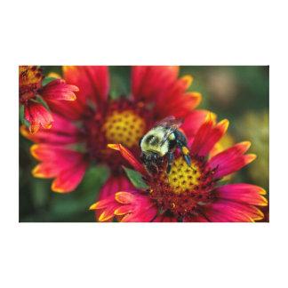 花粉のバスケットが付いている《昆虫》マルハナバチのクローズアップ キャンバスプリント