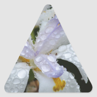 花雨Drop.jpg 三角形シール