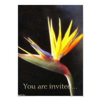 花3極楽鳥を切って下さい カード