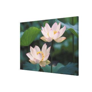 花、中国のはすの花 キャンバスプリント