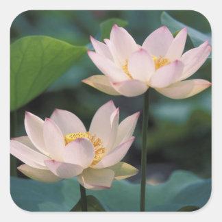 花、中国のはすの花 スクエアシール