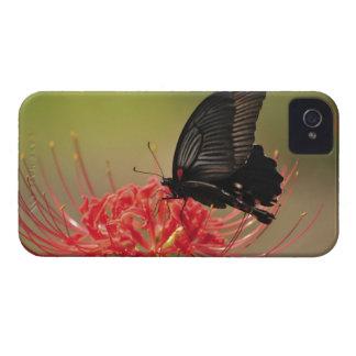 花、千葉のすばらしいモルモン教徒(Papilioのmemnon) Case-Mate iPhone 4 ケース