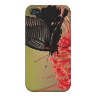 花、千葉のすばらしいモルモン教徒(Papilioのmemnon) iPhone 4 Case