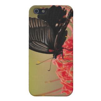 花、千葉のすばらしいモルモン教徒(Papilioのmemnon) iPhone 5 カバー